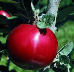 Orchard Plants / Planting my permaculture U-Pick orchard / by Danielle Venegas