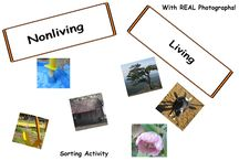 Science Activities For All Grades / Science activities for use in the classroom or homeschooling.