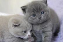 Katzen Babys