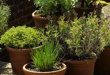 Jardiner - herbes aromatiques
