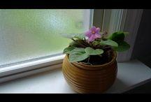 9 Plantas De Habitación Para Dormir