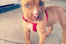 Puppy Love / by Leah Kimmel