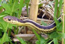 Snakes in garden