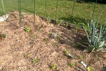 My edible garden / My little vege patch, herb garden, and orchard