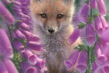 Fox<3