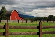 Flathead Valley Barns / The Flathead Valley, Montana is full of some of the most beautiful old barns I've ever seen.
