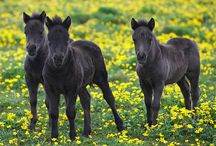 Equestrian♥