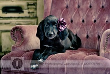 Pet Photography, props, and studios