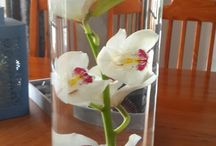 Orchids / Our Orchids