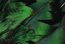 My green
