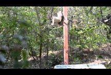 Wildlife Videos at Frontera Audubon