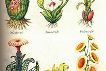 Fantastical Weird Wonderful Images / Drawings, illustrations, illuminated manuscripts, old and new and just for fun.
