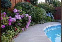 House- Pool landscape / by Jenn Matkin West