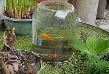 small pond ideas