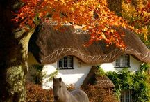 Horses of Fall / The best of horses in fall or autumn