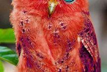 Owl baykuş