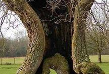 Niesamowite drzewa