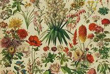 Vintage Botanicals