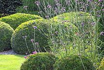 Yew garden