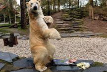 mon zoo préférer ( zoo de la flèche ) ❤️❤️❤️