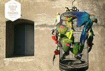 Fine Taxidermy Birdcage / From the Collection: La vie dans l'Eden Flamboyantly designed by Dutch Artists Sinke & van Tongeren