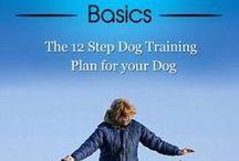 Honde-afrigting