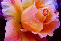 Flower_Orange&Yellow