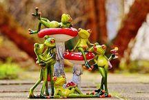 개구리, 관계