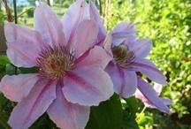 What's Blooming in My Garden
