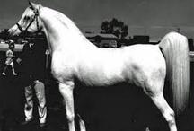 Horses / by Renzo Pretorius