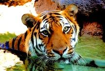 Photography by Keyra / Wedding, Family, Travel, and Animal Photography. All photos are a product of PhotographybyKeyra.com