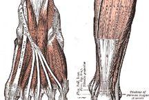 rheumotiod arthritis