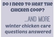 rescue chickens