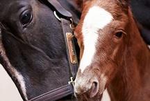 Bo dieren / Bo paarden