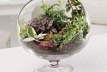 my garden inspirations / by Bri White-Martini