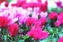 Riccione. Giardini d'autore / Splendida manifestazione riccionese http://www.riccionesocialclub.it/eventi/curiosando-i-giardini-dautore