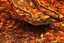 Incredible autumn...