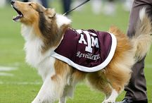 Thanks and Gig 'Em / by Madee McPherson