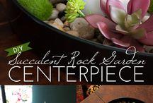 Succulent & Air Plant Projects