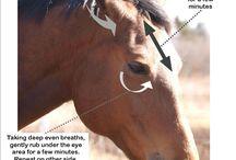 paardendingen