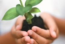 Paisagismo e sustentabilidade.
