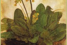 Növény