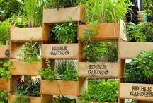Vertical garden / Вертикальный огород