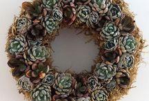Living Succulent Wreath or Echeveria Wreath / Succulent Wreath available at Nettleton Hollow.