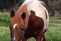 Pardalo / Paint horse