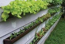 Garden ideas / Non-plant ideas for landscaping.