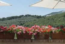"""Best holydays / there is a place in tuscany call """"L'Insolita"""" is a charming bed and breakfast (www.linsolita.it)."""
