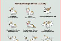 Pet Behavior and Training