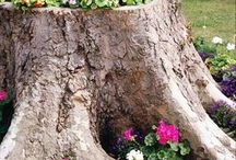 tronchi in fiore