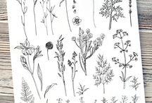 plant draw